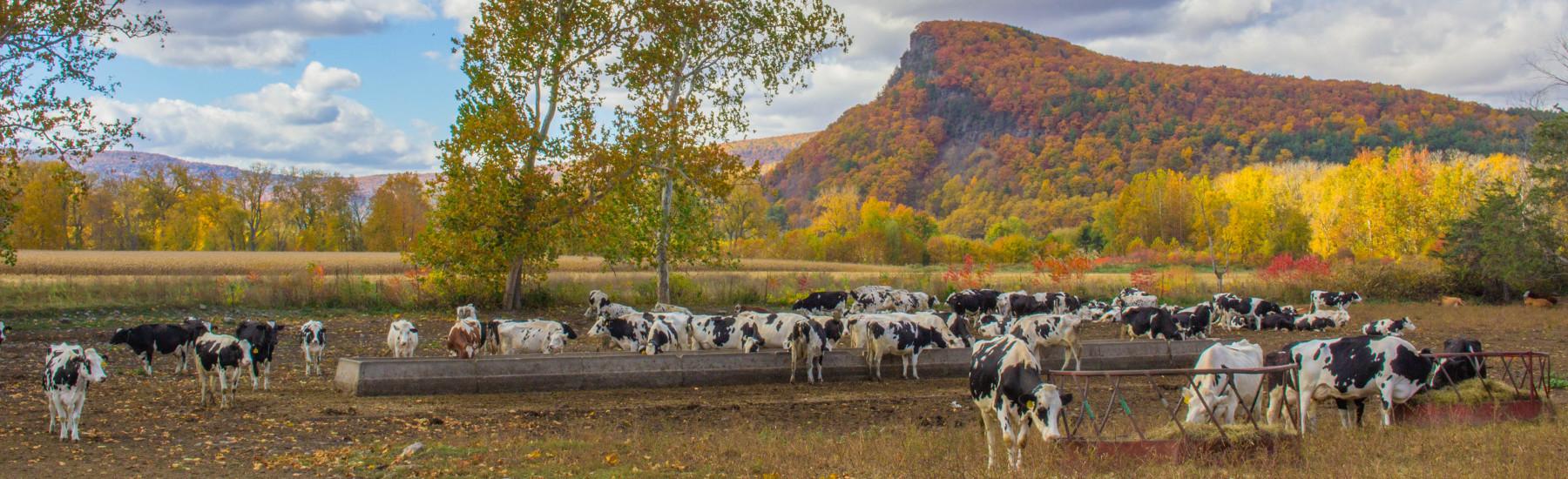 farm trail - vromans nose